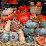Pumpkins on market Royalty Free Stock Photos