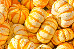 Pumpkins on a market Stock Image