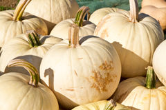 Pumpkins on a market Stock Photos