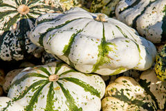 Pumpkins on a market Royalty Free Stock Photos