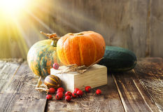 Pumpkins, melon and red berries Stock Image