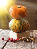 Pumpkins, melon and red berries Stock Images