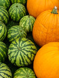 Pumpkins and melons Royalty Free Stock Image