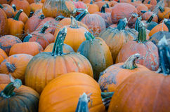 Pumpkins at a Minnesota Pumpkin Patch Royalty Free Stock Photos