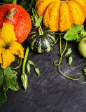 Pumpkins mix with stems and buds on dark slate tray. Food bakground Royalty Free Stock Images