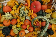 Pumpkins Mix Of Various Colors And Varieties Royalty Free Stock Images