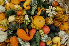 Pumpkins Mix Of Various Colors And Varieties Stock Photo