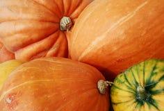 Pumpkins mixture Stock Image