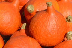 Pumpkins Royalty Free Stock Photo