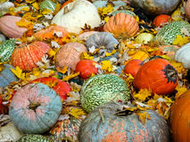 Pumpkins. Multicolored decorative pumpkins on autumn festival royalty free stock image
