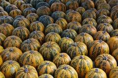 Pumpkins. Multicolored decorative pumpkins on autumn festival Stock Photo