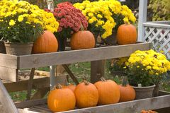 Pumpkins and Mums. Autumn Display of Pumpkins and Mums Royalty Free Stock Photography