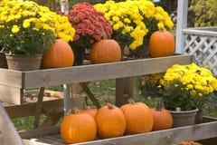 Pumpkins and Mums. Autumn Display of Pumpkins and Mums royalty free stock photography