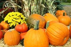Pumpkins, Mums and Cornstalks. Autumn decorations of pumpkins, yellow mums, cornstalks, straw and a wagon wheel Stock Photography
