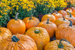 Pumpkins and mums Royalty Free Stock Photo