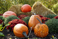Pumpkins, mums and hay Stock Photos