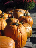 Pumpkins and mums. Sitting on wood pallet at market for sale Royalty Free Stock Photos