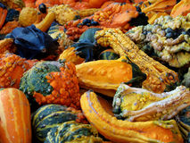 Pumpkins 'n Stuff. Pile of Halloween gourds, squash and pumpkins royalty free stock photography