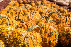 Pumpkins Royalty Free Stock Images