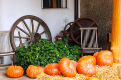 Pumpkins next to plant and old wagon wheel Stock Images