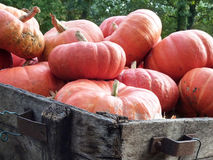 Pumpkins on old cart Stock Photography