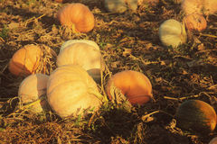 Pumpkins old style Royalty Free Stock Image