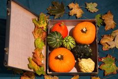 Pumpkins in the old suitcases / Autumn and Halloween concept Stock Image
