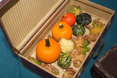 Pumpkins in the old suitcases / Autumn and Halloween concept Stock Photos