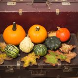 Pumpkins in the old suitcases / Autumn and Halloween concept Royalty Free Stock Photo