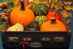 Pumpkins lying among autumn leaves at the bottom of old suitcases Royalty Free Stock Photography