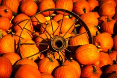 Pumpkins with an old wagon wheel Stock Image
