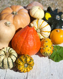 Pumpkins on old wood background. Assortment of Pumpkins on white old wood background royalty free stock photo