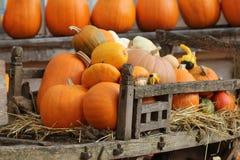 Pumpkins in old wooden cart. Stock Photos
