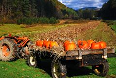 Free Pumpkins On A Tractor, Autumn Harvest Stock Photos - 113021193