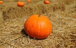 Pumpkins On Straw Stock Photos