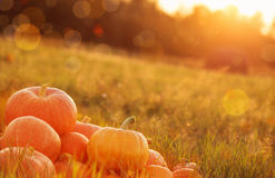 Pumpkins outdoor Royalty Free Stock Photography