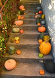 Pumpkins on the outdoor stairs Royalty Free Stock Photos