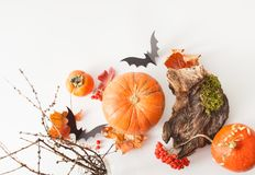 Pumpkins, paper bats with driftwood on white Stock Images