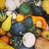 Pumpkins party. Colorful pumpkins gathered together Halloween Stock Image