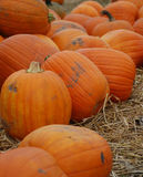 Pumpkins in a patch Royalty Free Stock Photo