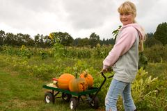 Pumpkins patch Stock Images