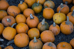 Pumpkins. Picked ready for sale royalty free stock photos