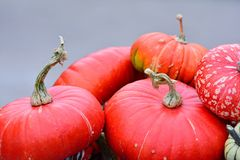 Pumpkins. Stock Photography
