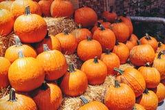 Pumpkins  pie tonight? Stock Image