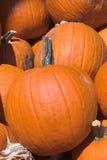 Pumpkins pile Royalty Free Stock Photos