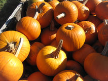 Pumpkins in a pile. Bright orange pumpkins with stems in a pile Stock Image