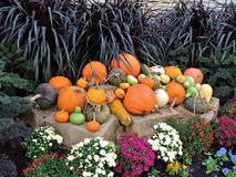 Pumpkins pile with flowers Royalty Free Stock Image