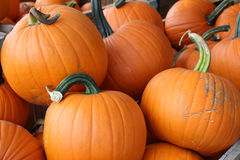 Pumpkins in a pile. Vibrant orange pumpkins with stems in a pile Stock Photography