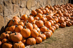 Pumpkins piled Royalty Free Stock Photo