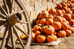 Pumpkins piled against a rustic stone wall Stock Photography